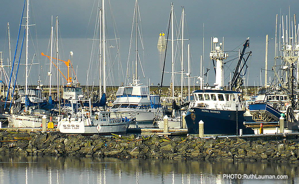 Commerccial Fishing Fleet at Blaine Marina.